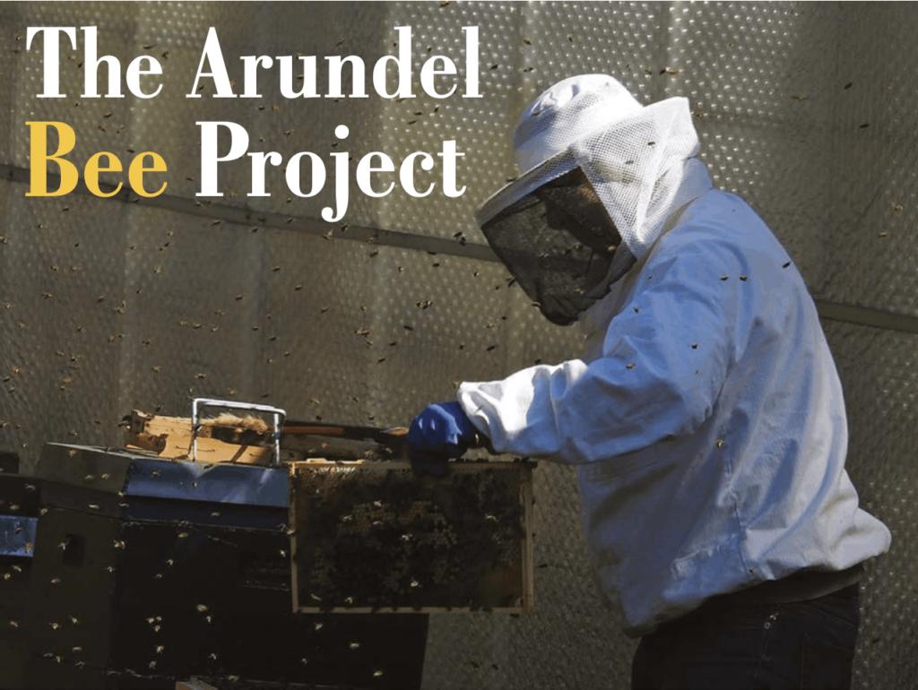 beekeeper looking in hive