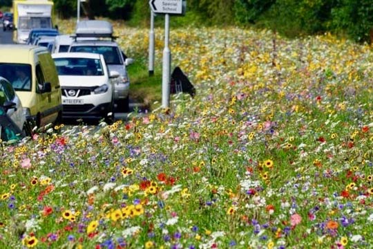 Wild flowers by the road side