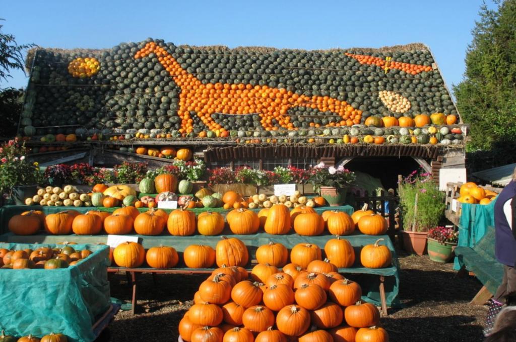 Pumpkin display at Slindon