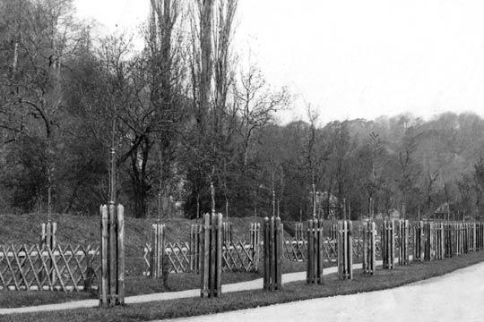 Planting of trees on mill raod